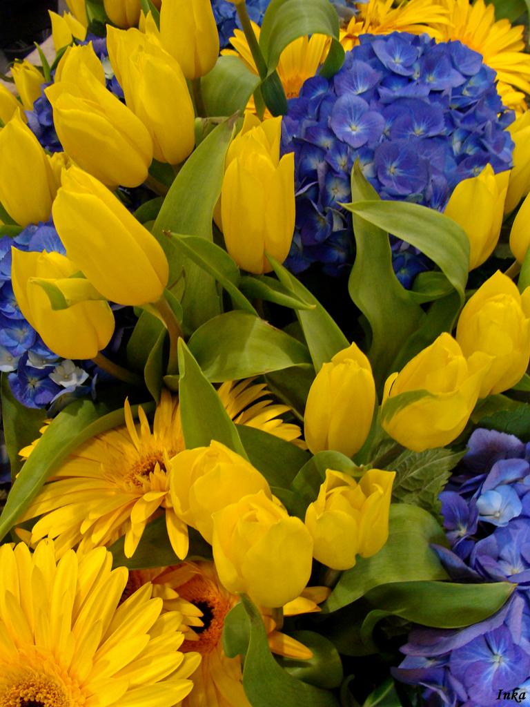 Tulipany, hortensje, gerbery